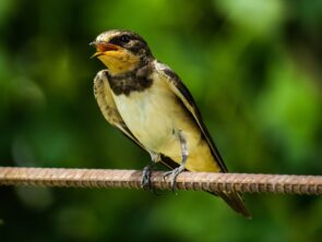 Bird Watching in Iran-North